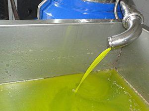 stagione dell'olio